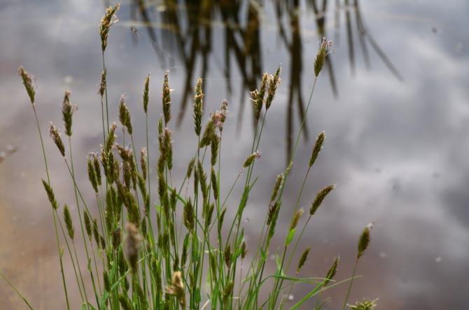 tráva a jezírko