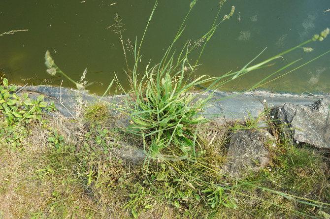 prostě tráva na břehu