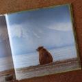 zen bear book kniha