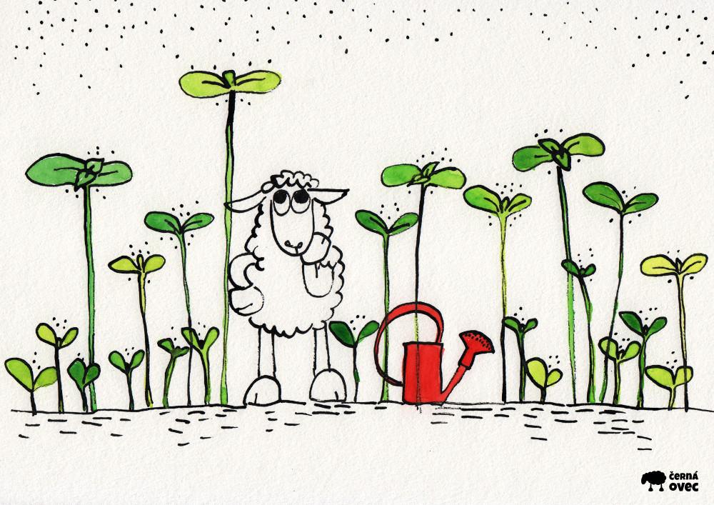 jaro | černá ovec
